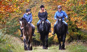 Horse-riding in the Slieve Blooms