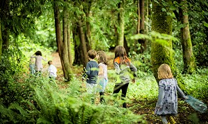 Woodland walking events in the Slieve Blooms